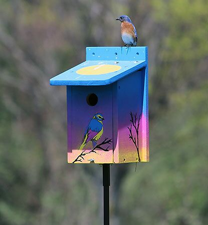 An Eastern Bluebird perches on a colorful birdhouse.