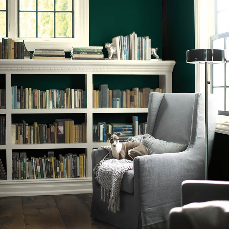 A dark green-painted library with dog nestled on comfy chair includes white paint on both trim and bookcases. Colour of the Year 2019